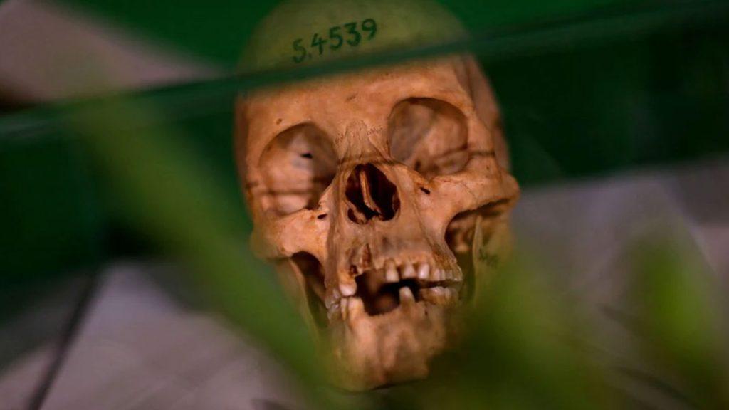 Human skulls from the Herero and ethnic Nama people